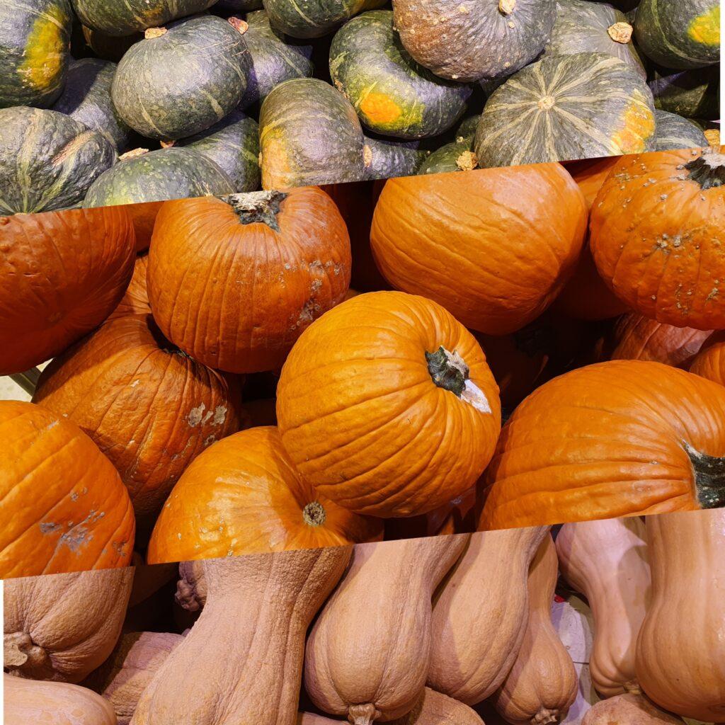 la foto riporta le zucche di diversi tipi: tonde e lunghe, gialle, verdi e bianche